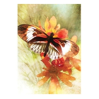 Butterfly Affirmations / Бабочка Аффирмации